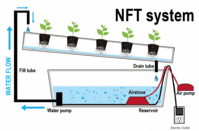 NFT Systems
